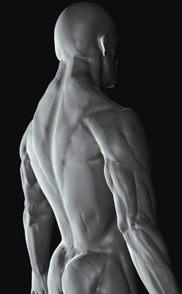 A 3D model of the human body created in the animation programs