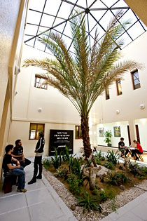 A palm tree in the entryway of NYFA Abu Dhabi