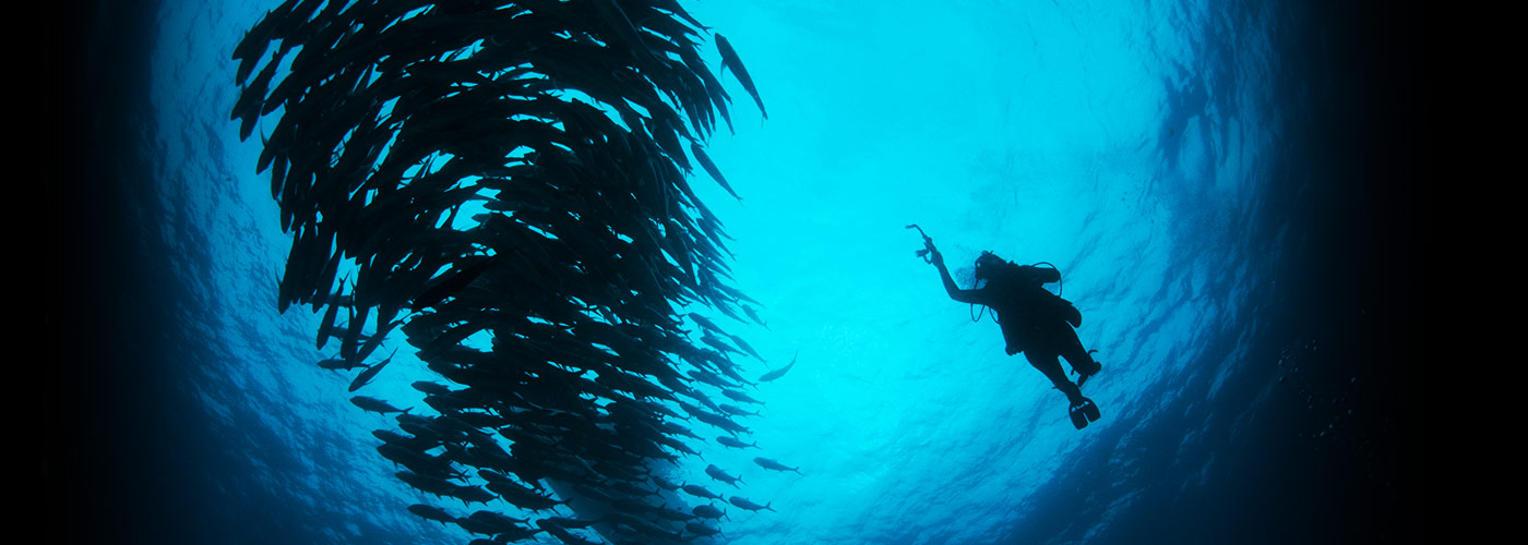 New York Film Academy documentary filmmaking student captures a school of fish underwater.