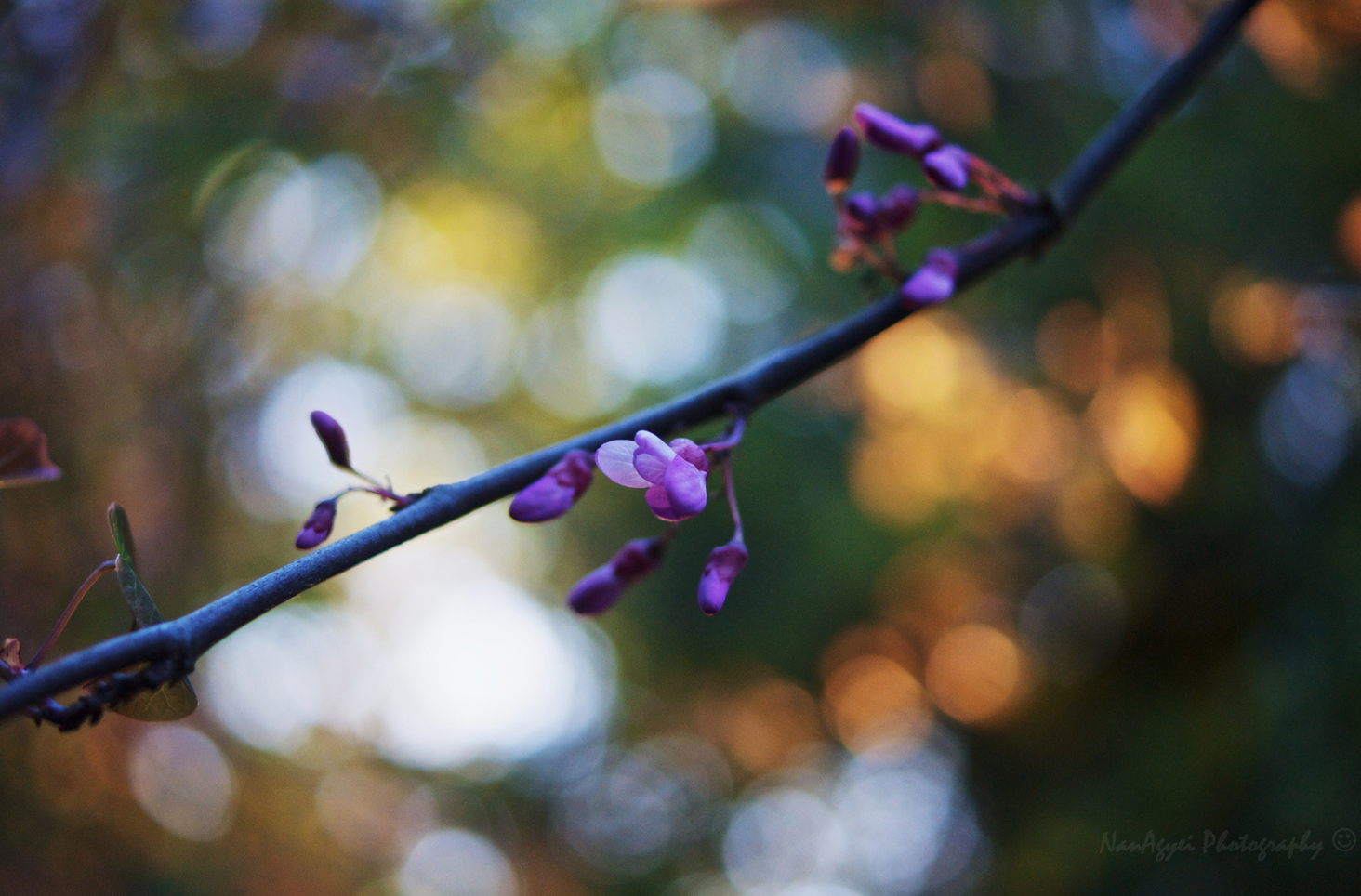 Bokeh Photography - Capturing The Bokeh Effect