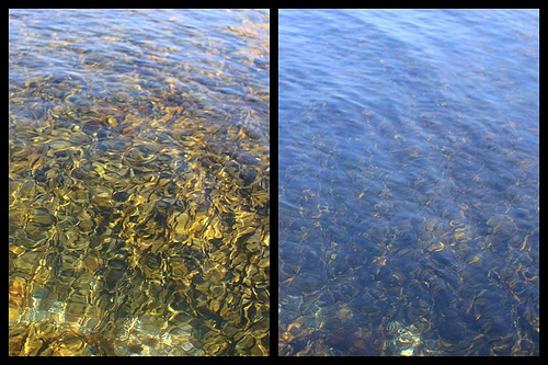 polarized filters