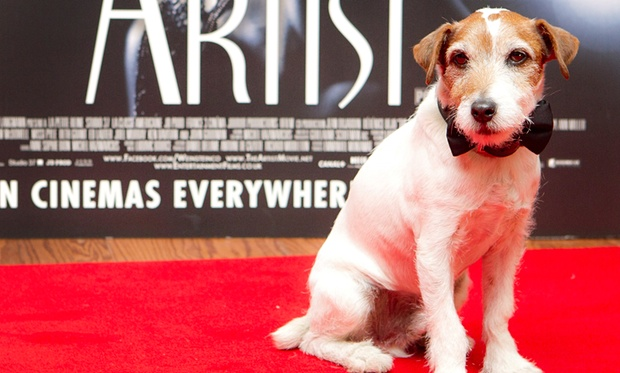 Uggie the Dog on the red carpet
