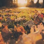 Autumn Photography: 5 Tips for Capturing the Best Photos of Fall