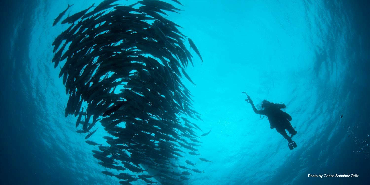 Photographer in ocean taking picture of school of fish