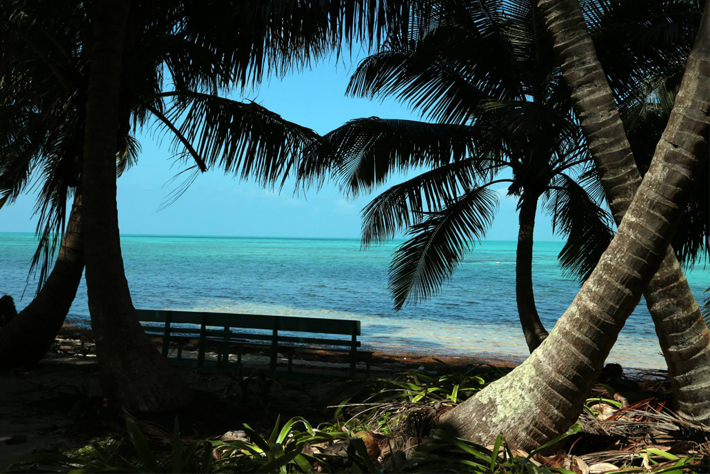 Palm trees and wooden bench on shore of ocean