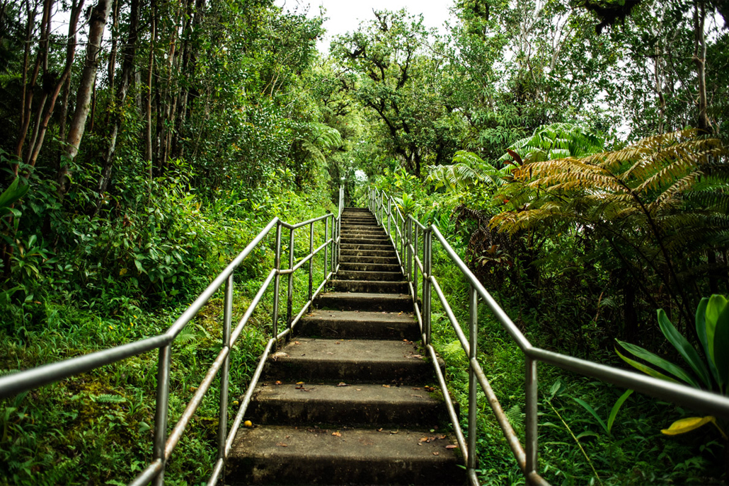 Staircase leading up through Hawaii forest