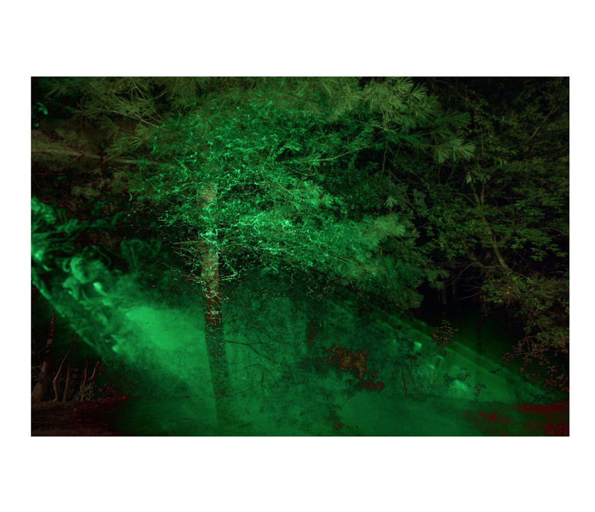 Forest with green lights and fog across trees