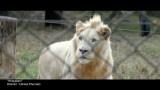 NYFA Documentary Student Highlight Reel